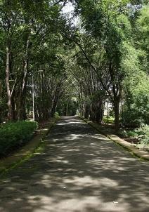 നിലമ്പൂര്