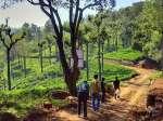 Top 12 Hill Stations in Tamil Nadu