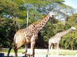 We Bet You Didn't Know These Facts About Mysore Zoo!