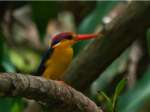 Must-Visit Places In India For Birdwatchers