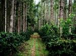 10 Best Places To Visit In Karnataka In November
