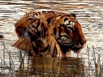 Producer Depshikha Deshmukh shares stunning wildlife images from Tadoba-Andhari National Park