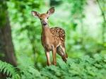 10 Best Wildlife Sanctuaries To Visit In India In Monsoon
