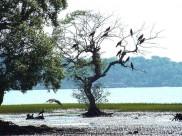 Bird-Watching At Goa