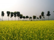 Tips to Travel to Rural India