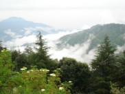 Chail - The Untouched Natural Beauty Of Himachal Pradesh