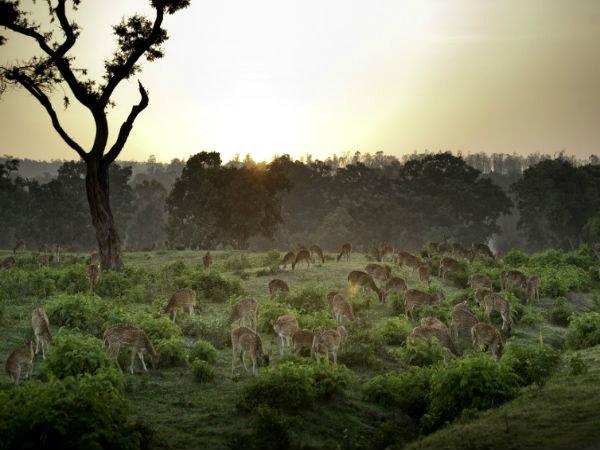 India beckons Ecotourism