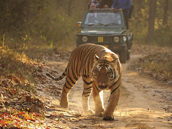 In Detail: Top Safari Parks In India