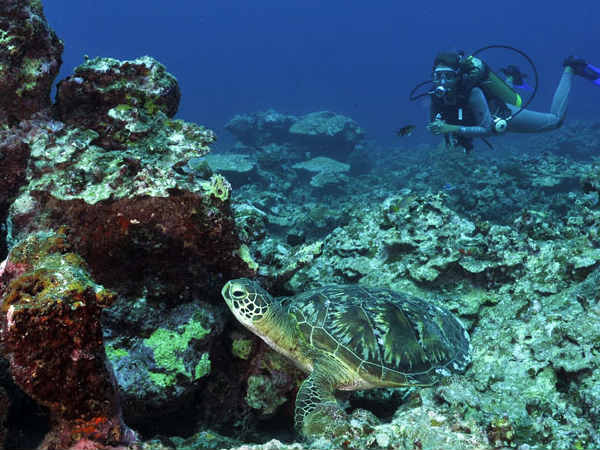 Dive Into The Secrets Of Lakshadweep