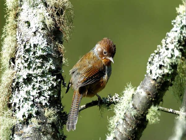Birds of Arunachal Pradesh - Nativeplanet