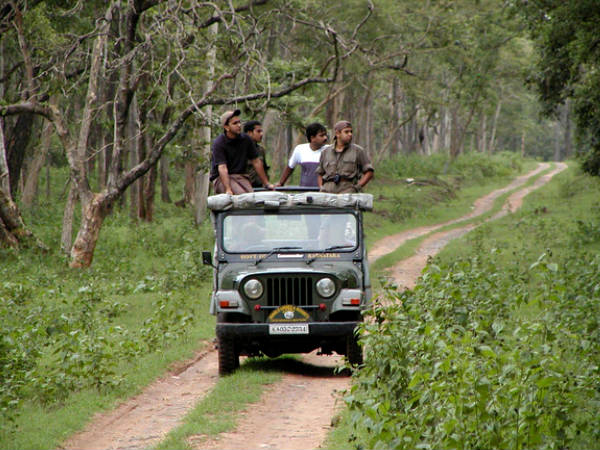 Jungle Safari at Mudumalai...