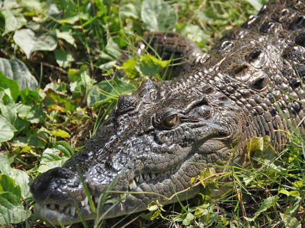 Sundarbans: The Beauty and the Beast
