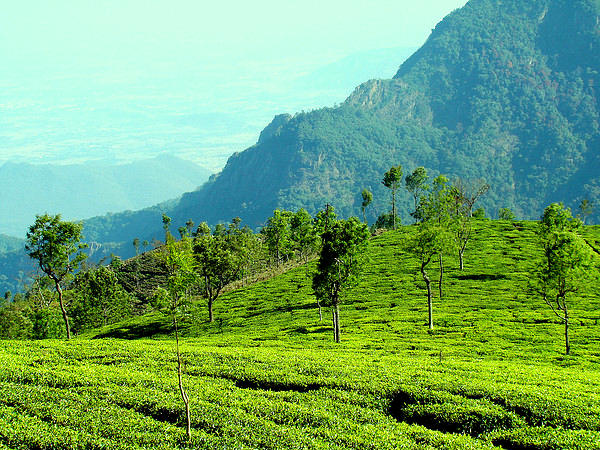 Places in South India to Visit this March!