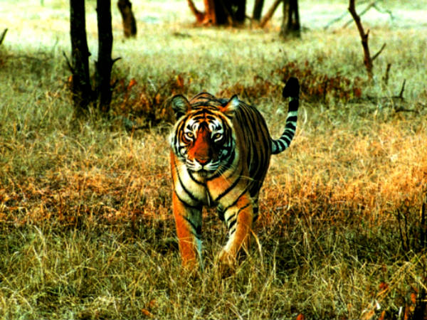 Venture into the Wild at Bandipur
