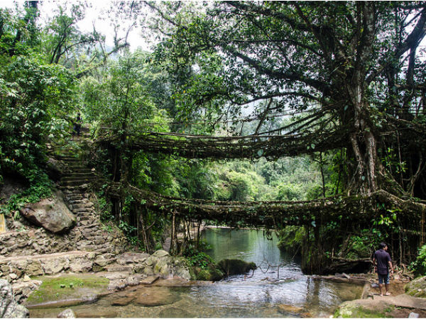 Also Read: Best Places To Visit In Meghalaya