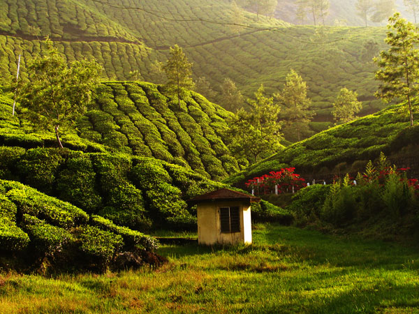 Top Places to Visit in South India During July