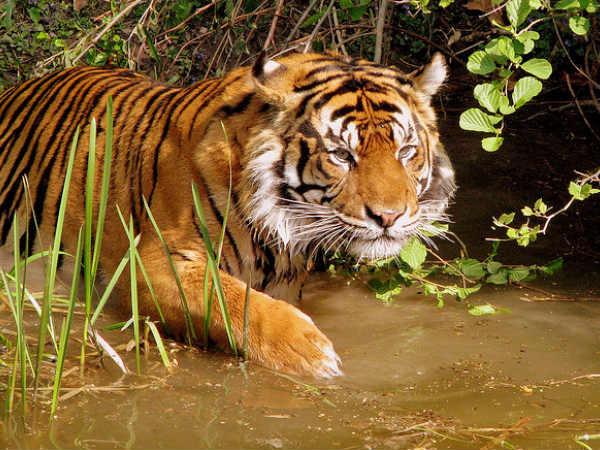 Hoshangabad, Home to Wild Encounters