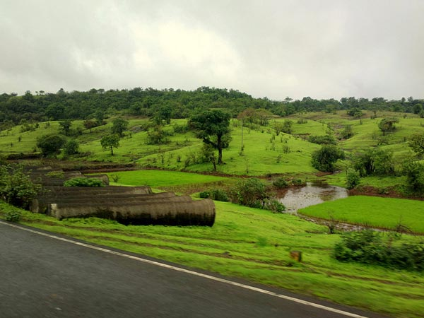 Lush Greenery Born Of Rains