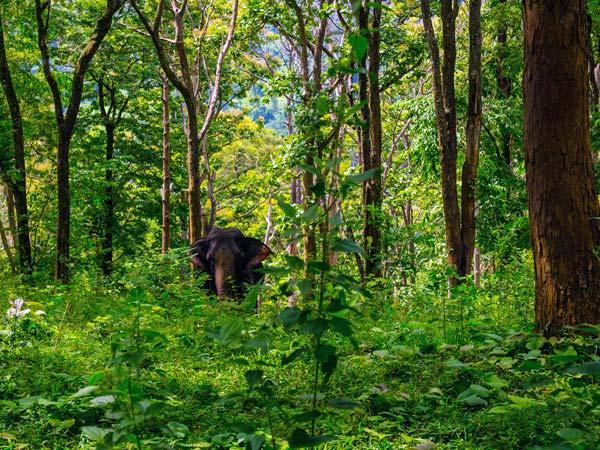 Treasures of Nature at Pollachi, Tamil Nadu