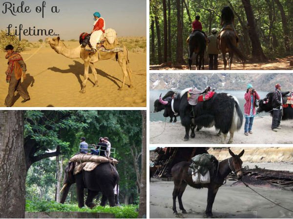 5 Unique Means of Transport in India!