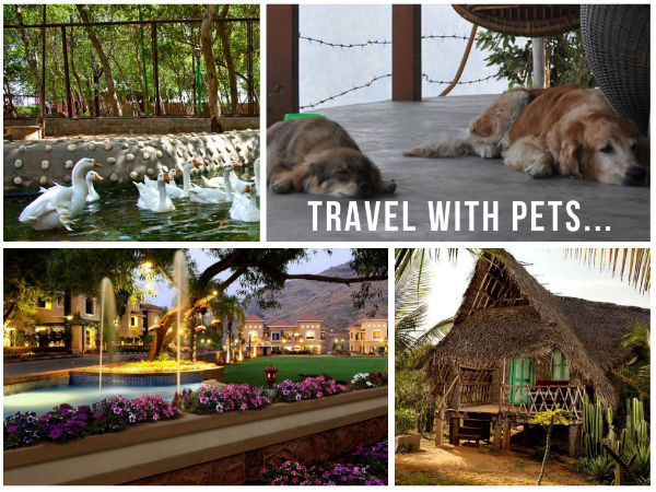 10 Pet Friendly Stay Options in India