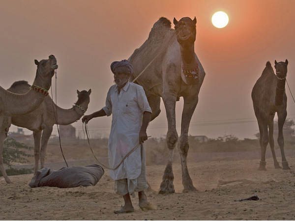 5 Camel Safari Destinations in India