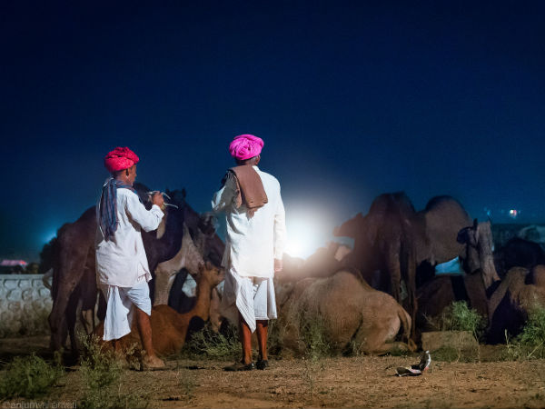 The Unique Pushkar Camel Fair, Rajasthan