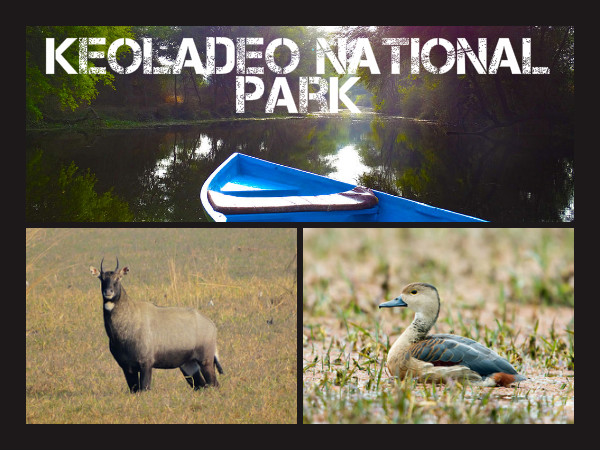 Bird Watching and Nature Trails in Keoladeo National Park