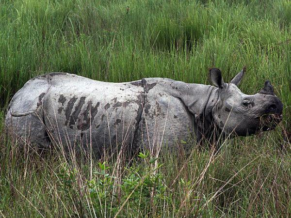 7 National Parks in Assam