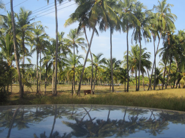 Discovering Peace and Beauty on a Lesser Known Trail of Kerala