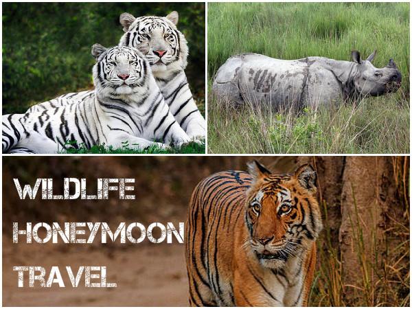 5 Wildlife Honeymoon Getaways in India