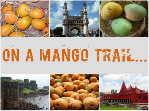 On a Mango Trail...