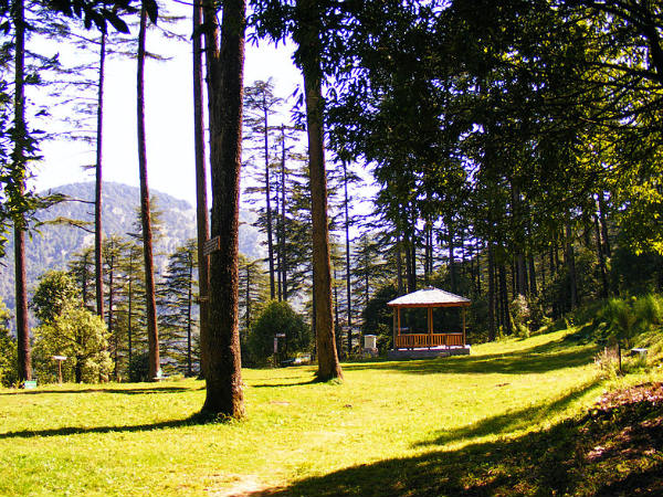 View of the Deodar trees