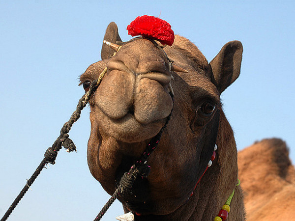 How to Reach Pushkar