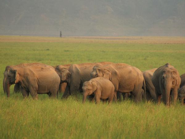 Famous Wildlife Sanctuaries In North India