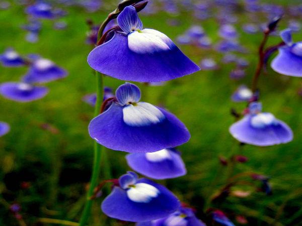 Top 5 Enchanting Flower Valleys In India