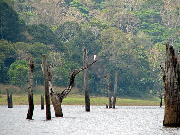 Thekkady: Awarded World's Top Emerging Destination