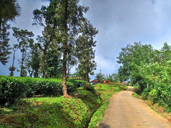 a road inside tea plantation