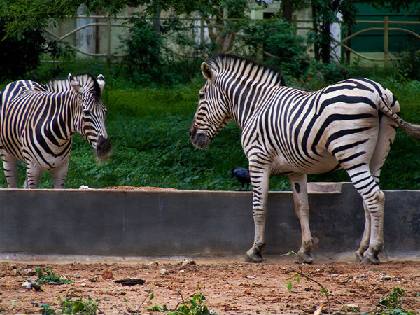 Mysore Zoo is the 3rd Oldest in India