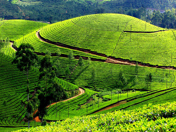 Enchanting Idukki Tourism in Kerala