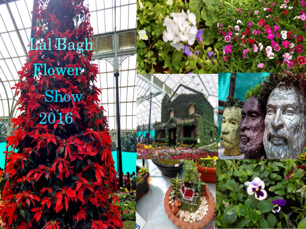 Lal Bagh Flower Show 2016: Colours & Flowers