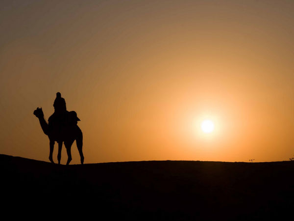 Exciting Camel Safari in Thar