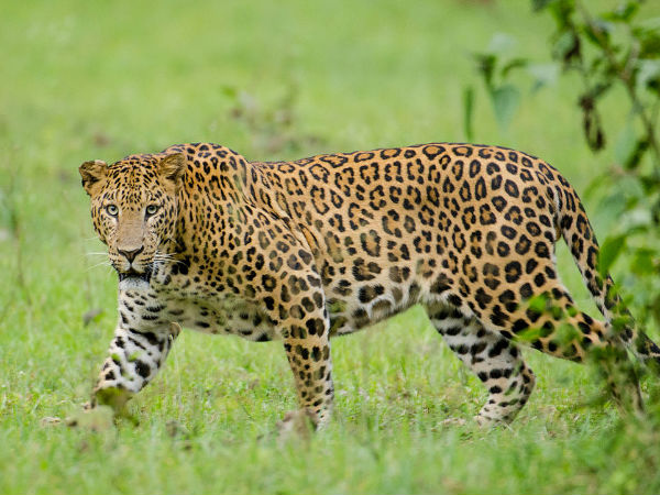 Nagarhole - Wildlife Safari
