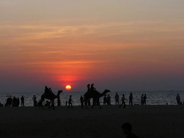 Malpe Beach - Camel Ride