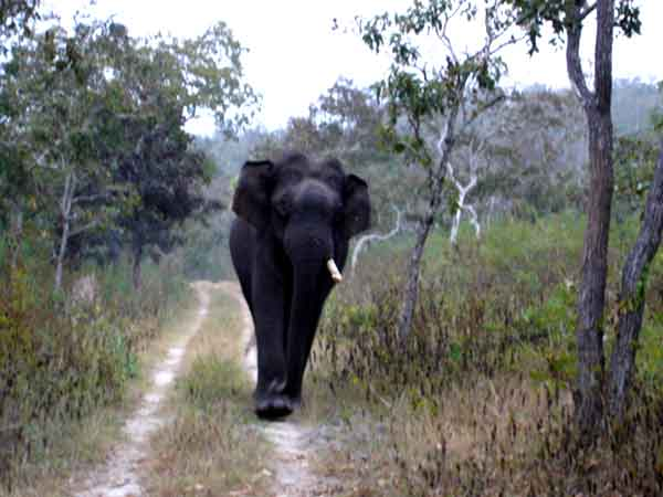 Top 5 List of Don'ts to Follow When Crossing the Bandipur Forest Reserve