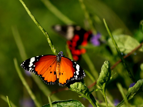4 Popular Butterfly Parks in India