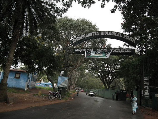 A Journey to Bannerghatta National Park