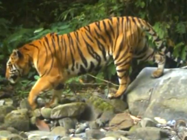 Tiger Reserves in North East India