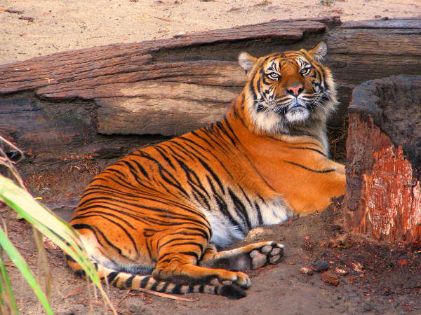 4 Tiger Reserves in North East India