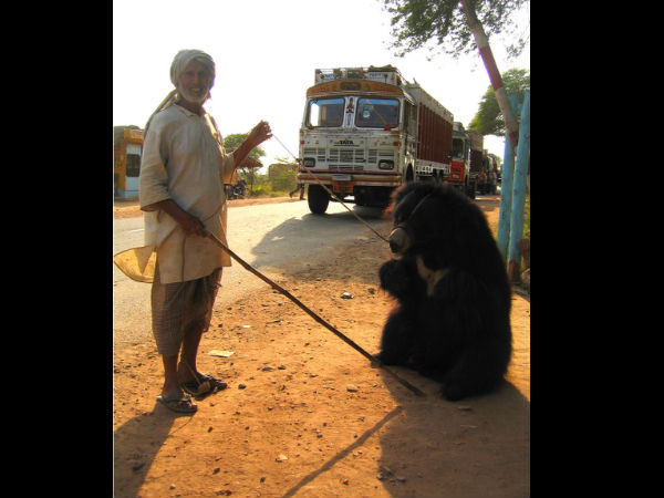 Top Bear Sanctuaries in India!